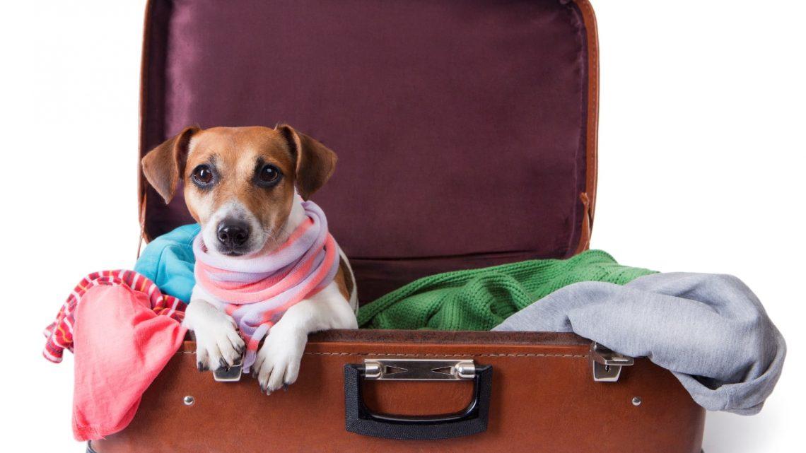 Viajar com animal de estimação: o que você precisa saber