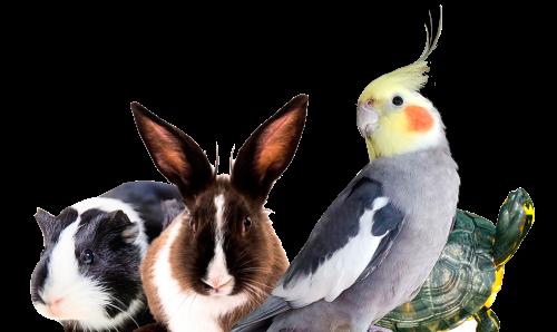 Quais são as principais raças de coelhos