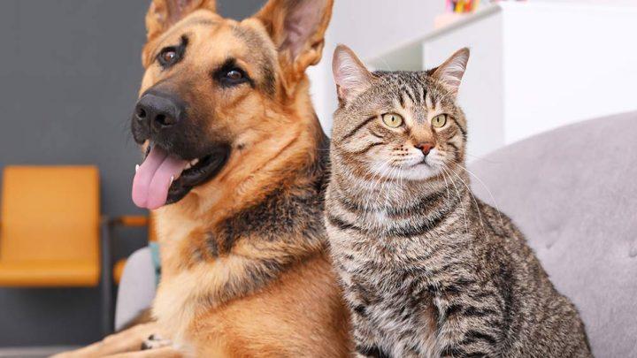A importância do vermífugo para cães e gatos