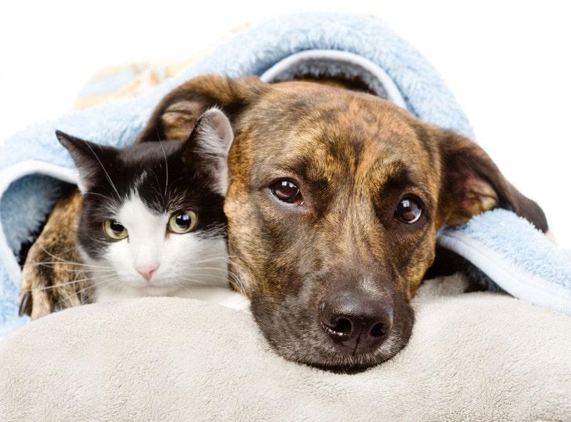 Doença renal crônica em cães e gatos