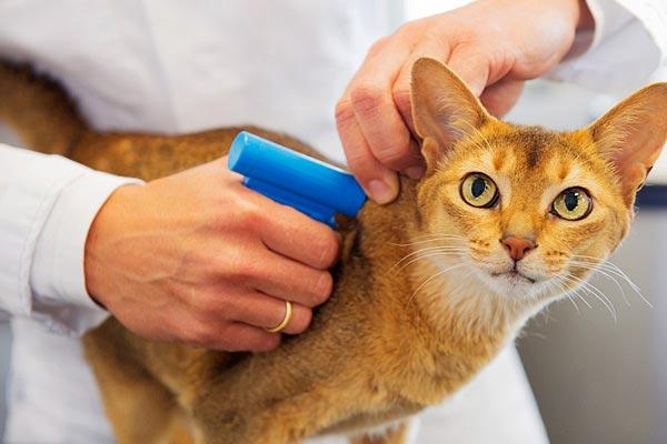 Microchip para cães e gatos: uma forma de deixar seu pet mais seguro