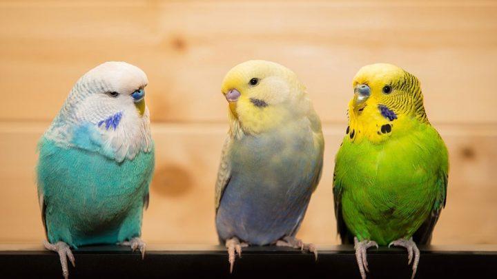 Alimentação de pássaros: conheça suas diferenças