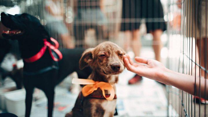A importância da adoção de animais de estimação