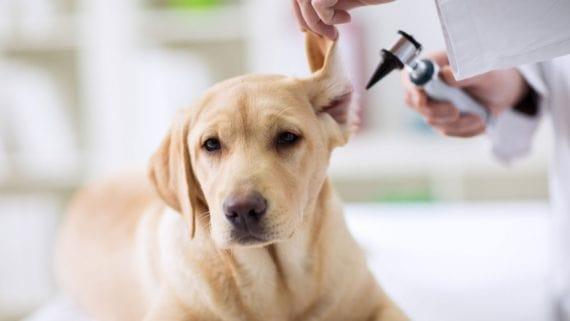 Dermatologia para pets: conheça a especialidade