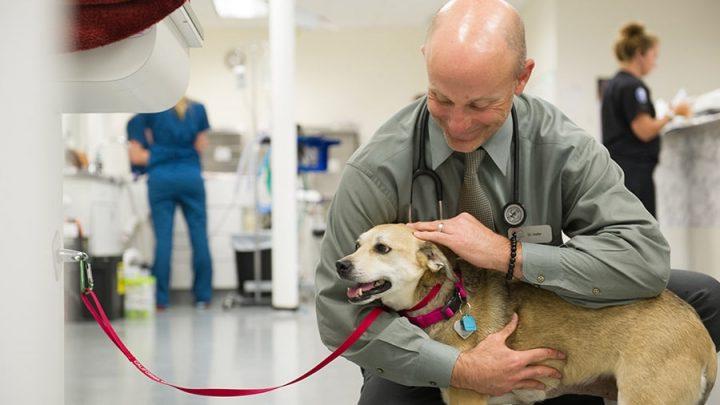Oncologia veterinária para o tratamento do câncer