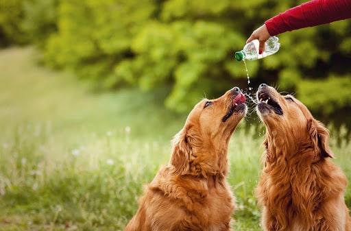 Como proteger pets do calor intenso?