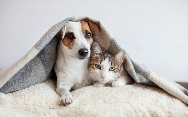 microchip para cães e gatos