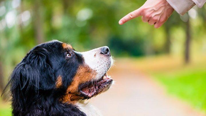 Saiba quais os erros mais comuns ao adestrar cães