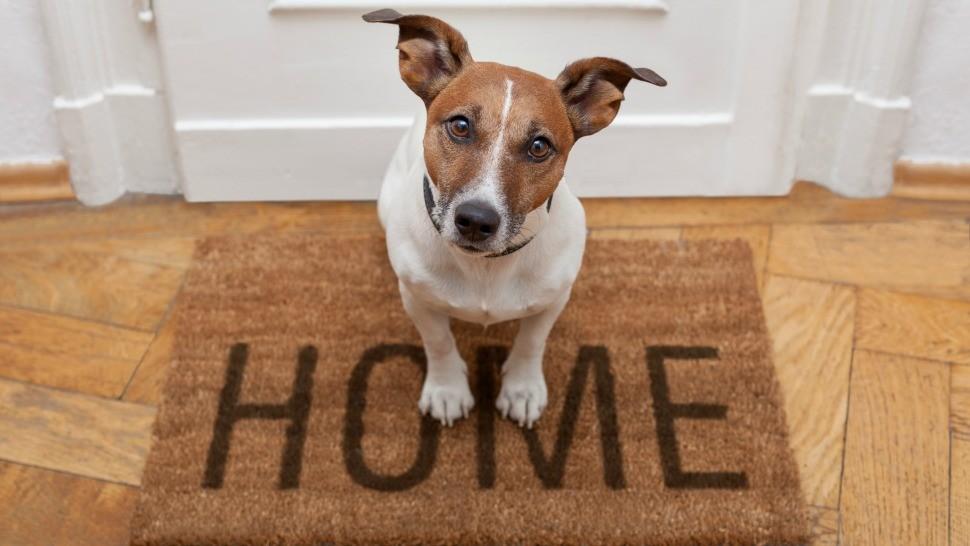Brincadeiras com pets em casa e combate à depressão