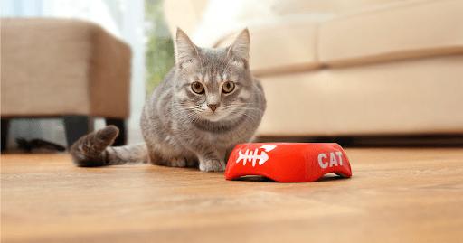 Quais alimentos são proibidos para gatos?