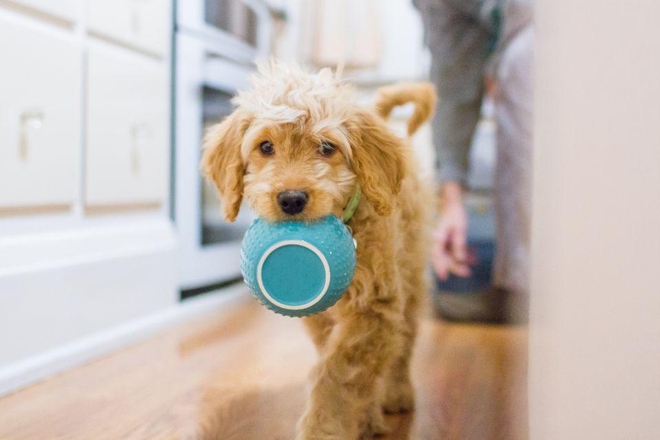 Alimentação dos pets na quarentena e os seus cuidados