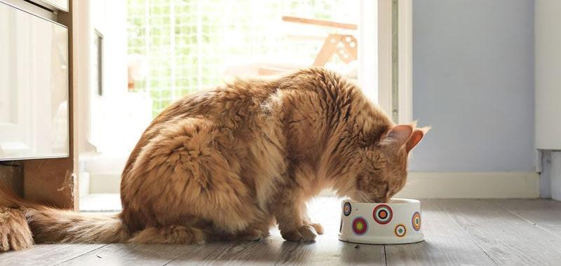 Gatos idosos: quais cuidados eu devo ter?