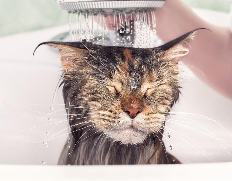 Banho em cães e gatos na quarentena
