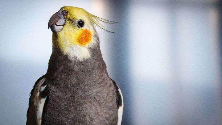 alimentação de pássaros