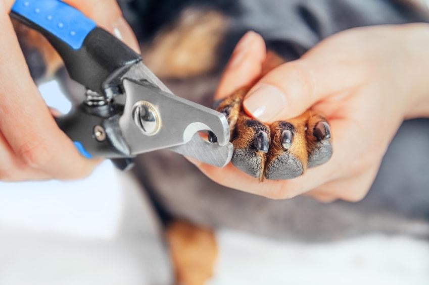 Dicas para cortar as unhas de cachorros em casa