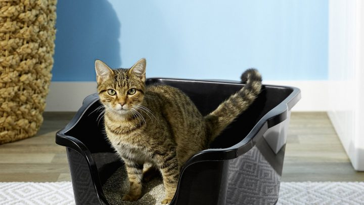 Caixa de areia para gatos: como utilizá-la?