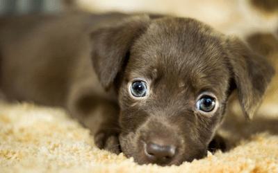 Cinomose em cães e tudo o que você precisa saber