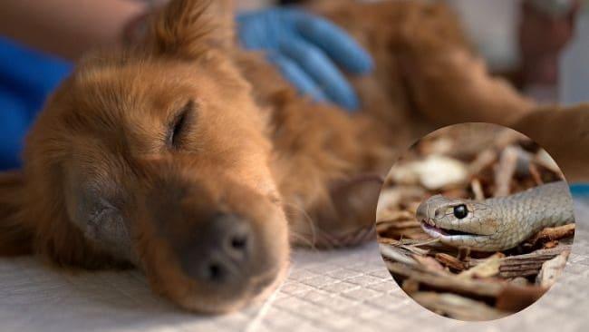 Picadas de animais peçonhentos em pets: o que fazer?