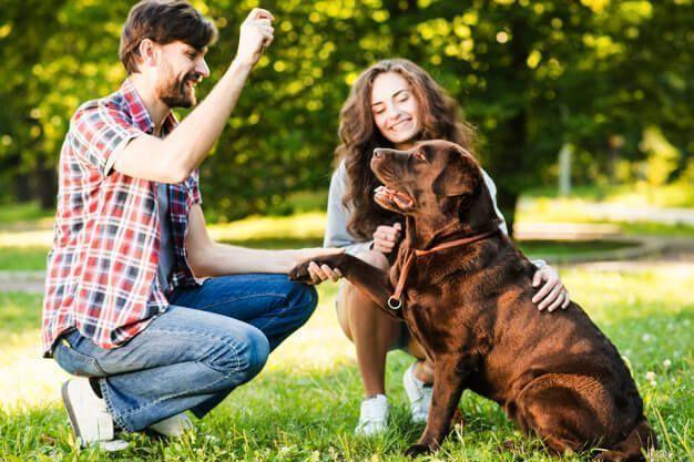 Dicas de adestramento de cães