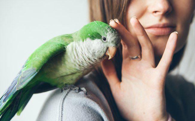 Como ter animais silvestres e exóticos?
