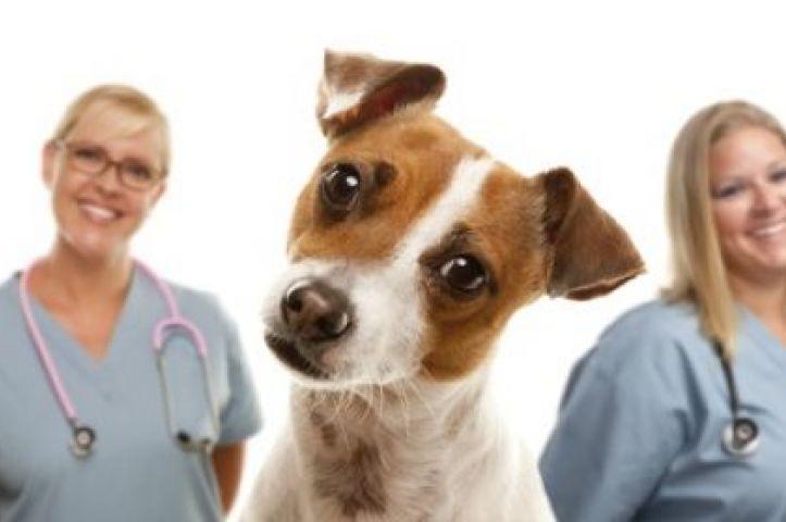 https://www.cevek.com.br/imagens/uploads/imgs/cursos/723x480/enfermeiro-veterinario.jpg